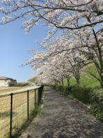 三隅の「春」